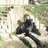 Гена Мельник, 29, г.Бричаны