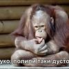 Зигмундович, 39, г.Хараре